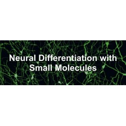 Small Molecules for Neural Induction of Stem Cells
